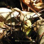カナヘビの卵の色の大きさについて!