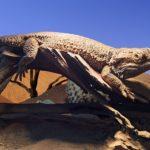 フトアゴヒゲトカゲの脱皮不全と尻尾の対策について!